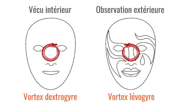 Vortex dextrogyre et vortex lévogyre